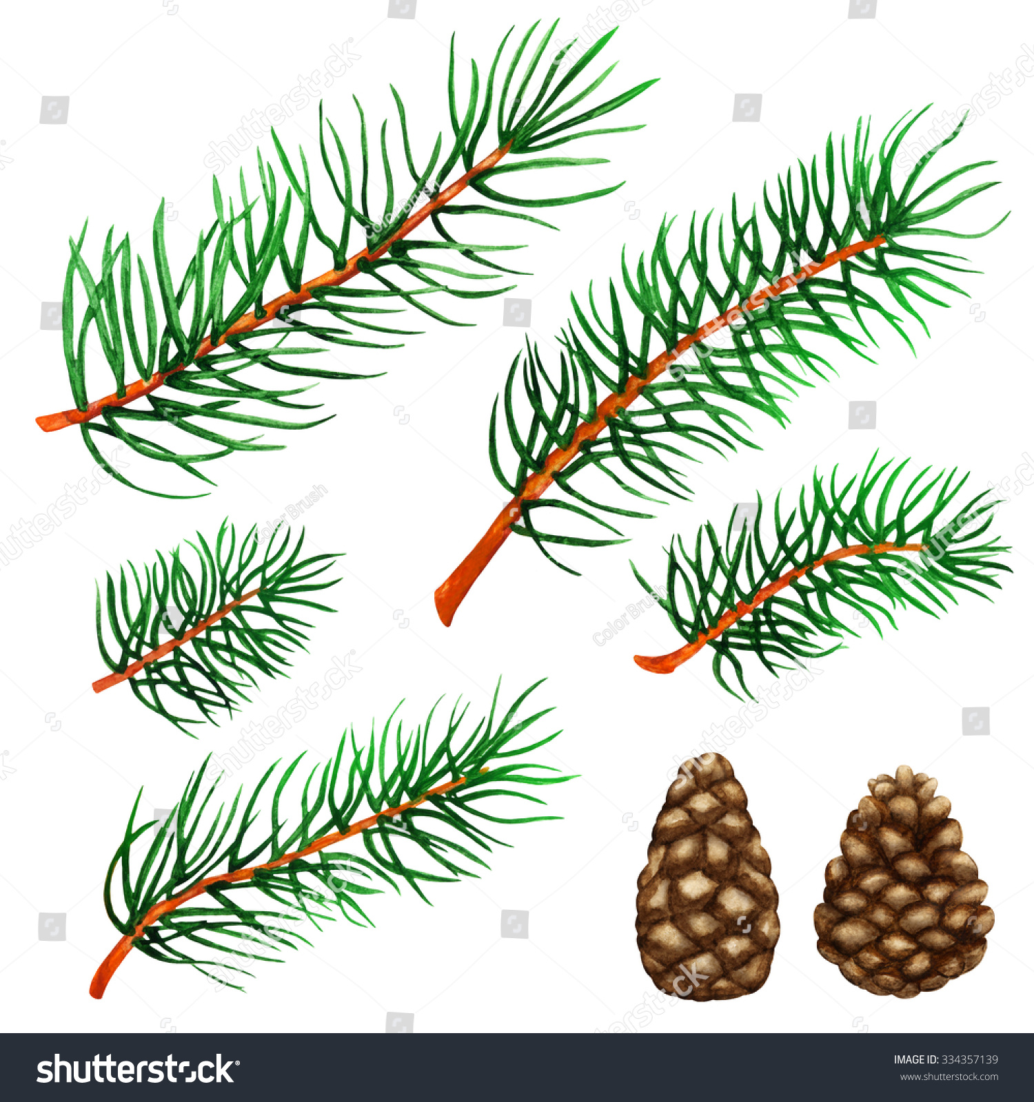 Watercolor Pine Tree Branches Cones Set Stock Illustration