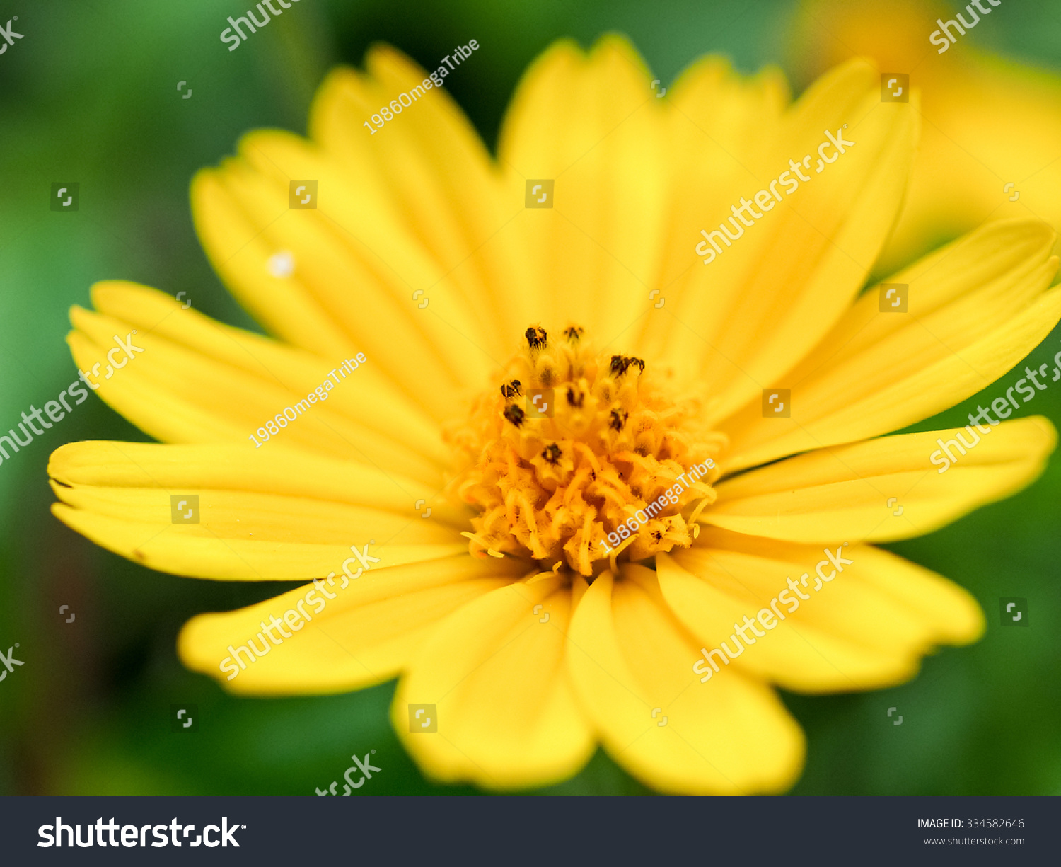 Closeup yellow flower on rode side ez canvas mightylinksfo