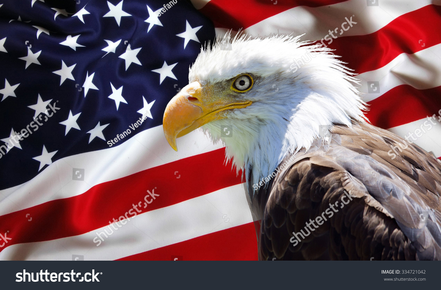 Background Wallpaper North American Bald Eagle Stock Photo Edit Now