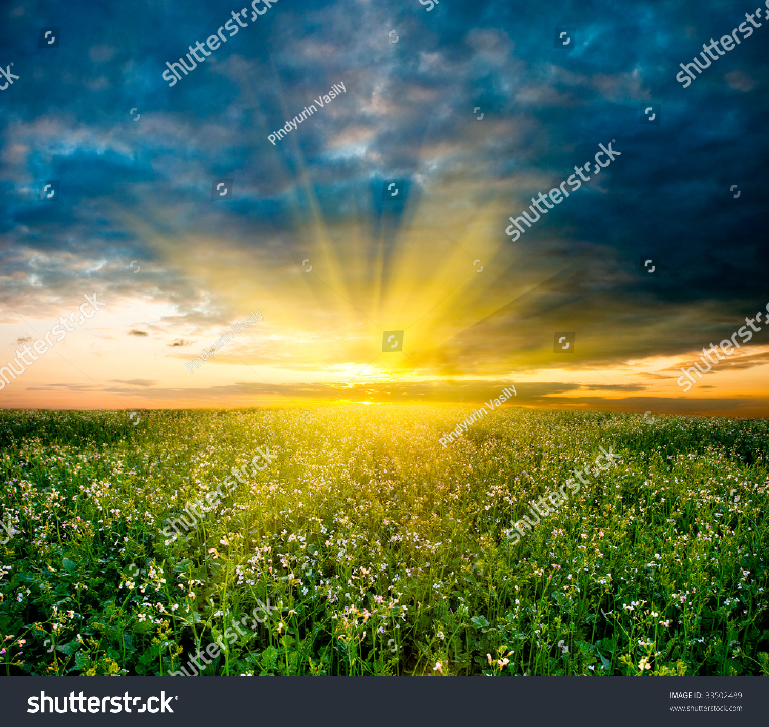 Sunset In The Field With White Flowers Ez Canvas
