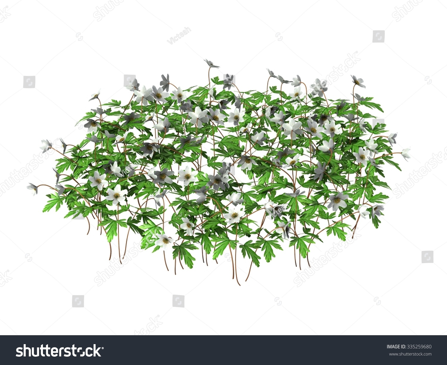 Green Plants With Flowers Isolated On White Background Ez Canvas