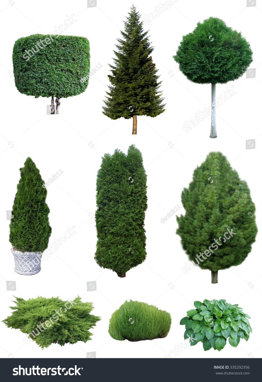 set of trees and shrubs set of various evergreen trees and shrubs for the garden