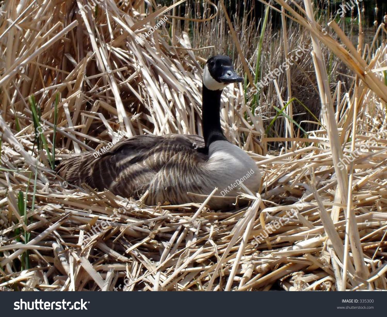 canada goose parka kopen
