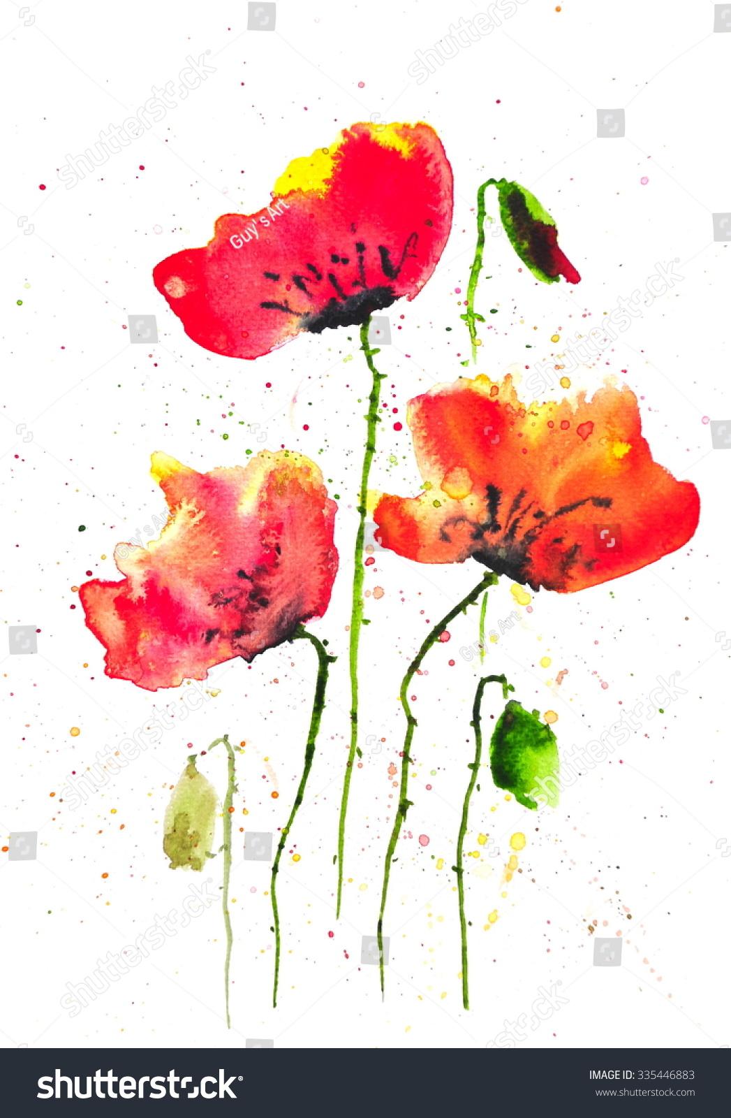 Modern Art Of Red Poppy Flowers Watercolor Illustrator On White