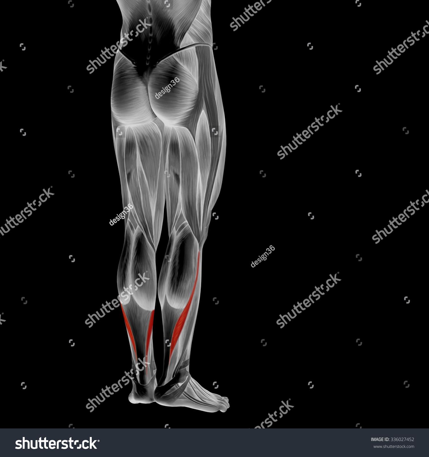 Concept Conceptual 3 D Human Lower Leg Stock Illustration 336027452 ...