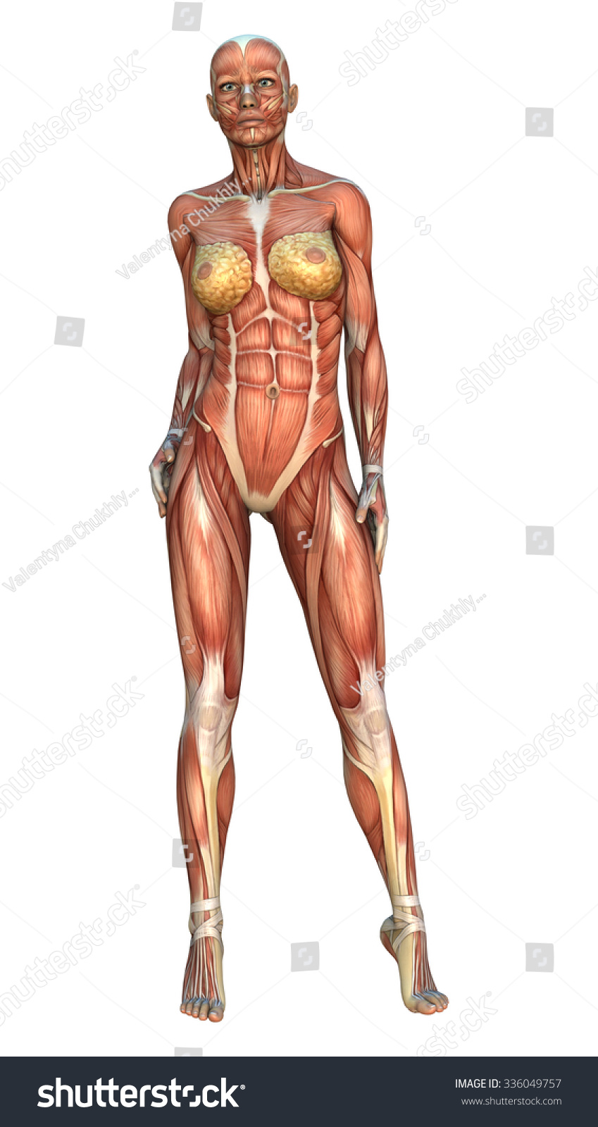3 D Digital Render Female Figure Muscle Stock Illustration 336049757 ...