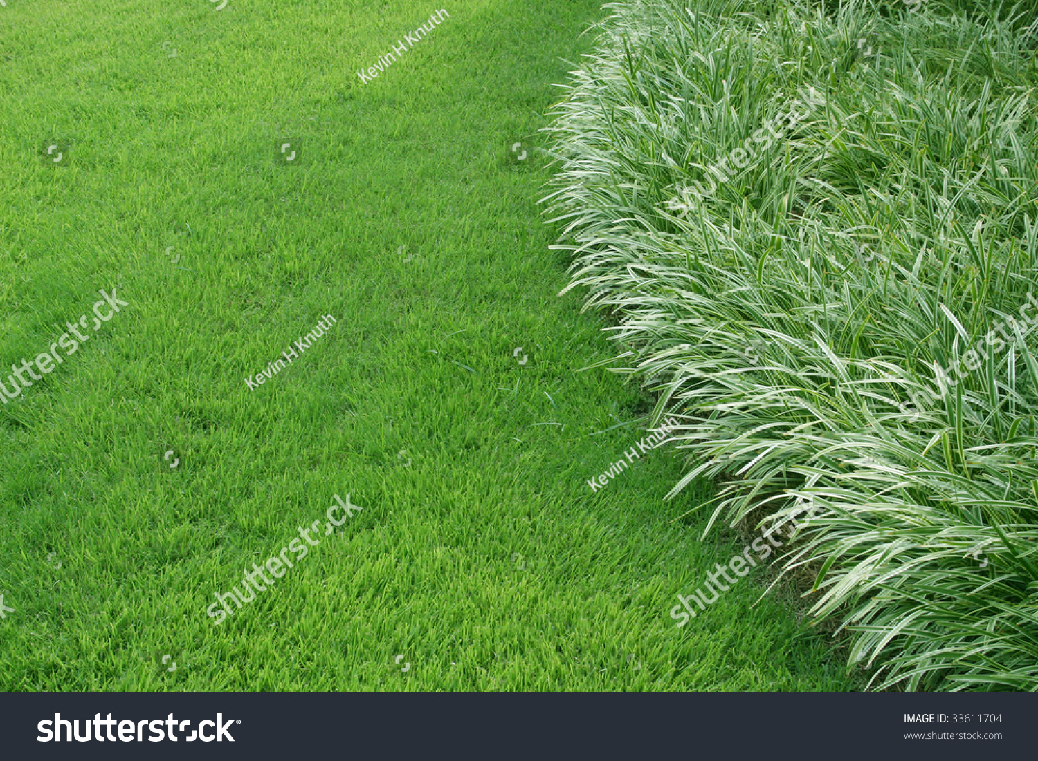 Ornamental grass edge with space stock photo 33611704 for Ornamental grasses for small spaces