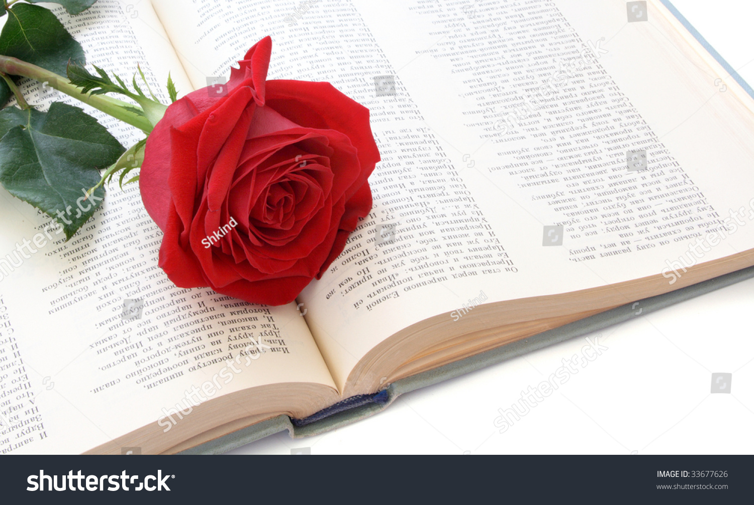 Rose Red Color On Pages Book Stock Photo (Royalty Free) 33677626 ...