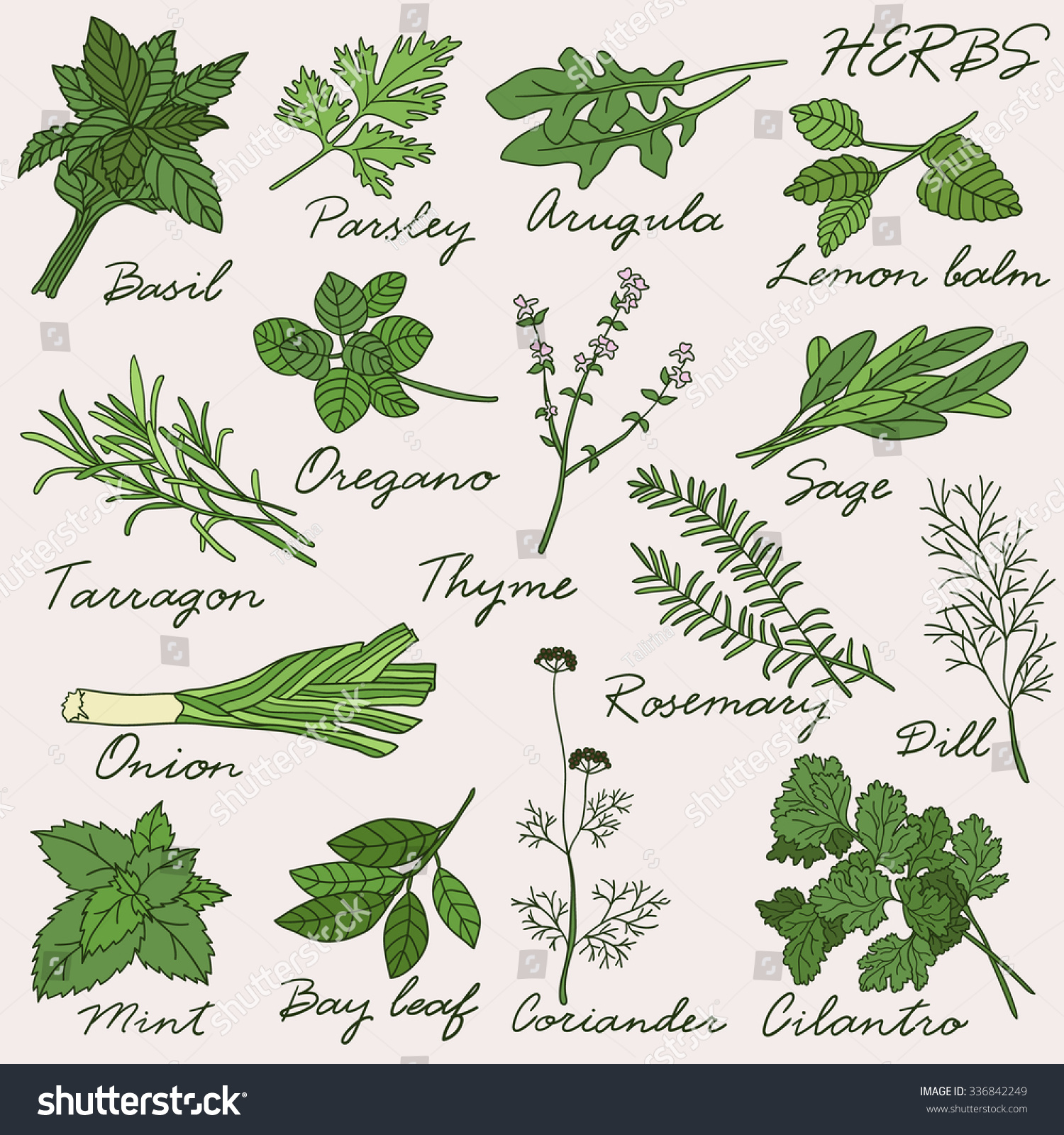 H and m herbs