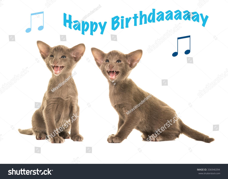birthday card two siamese sitting grey stock photo 336946394