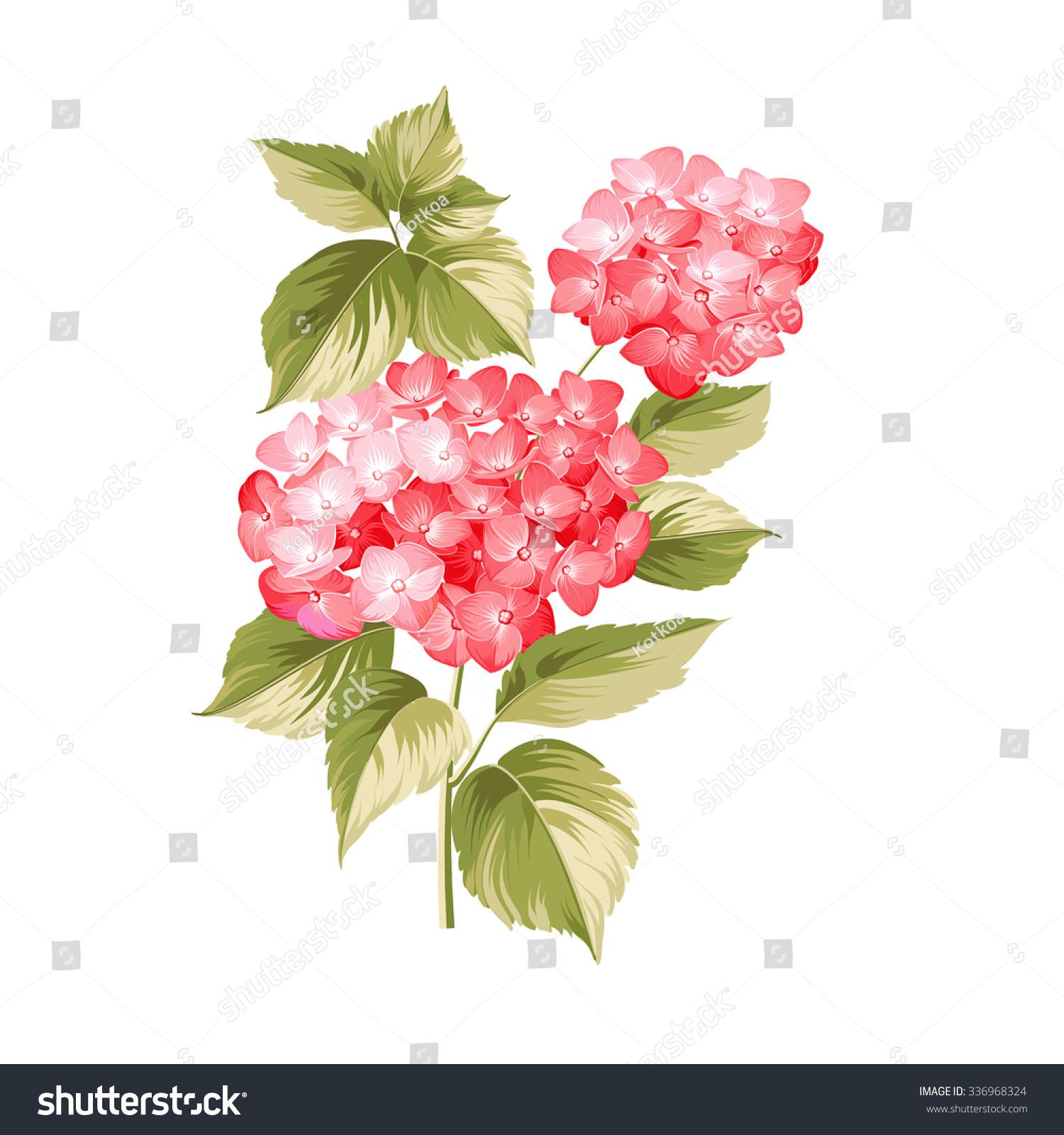 Hortensia Flower Red Realistic Hydrangea Illustration 스톡