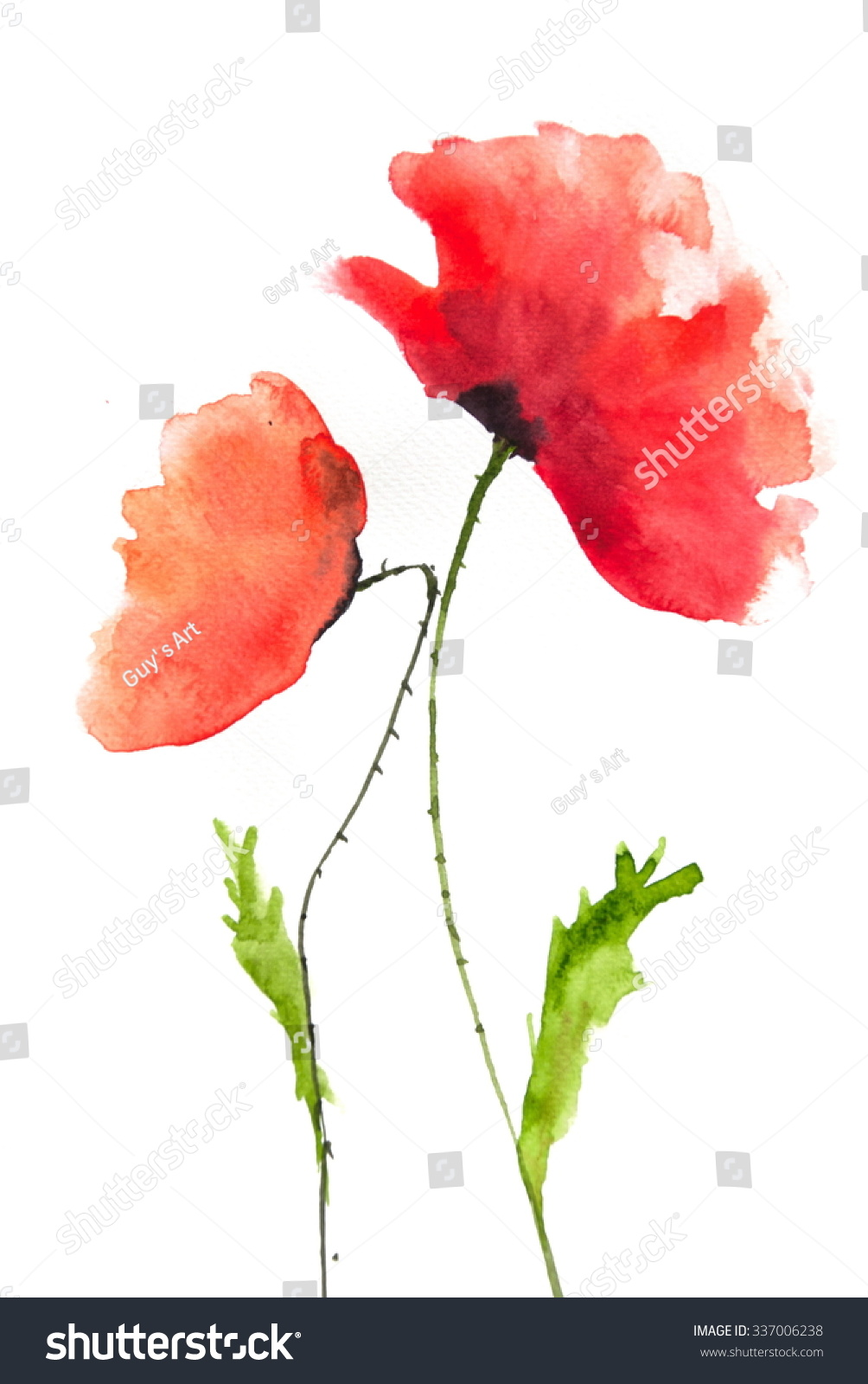 Red Beautiful Poppy Flowers Ez Canvas