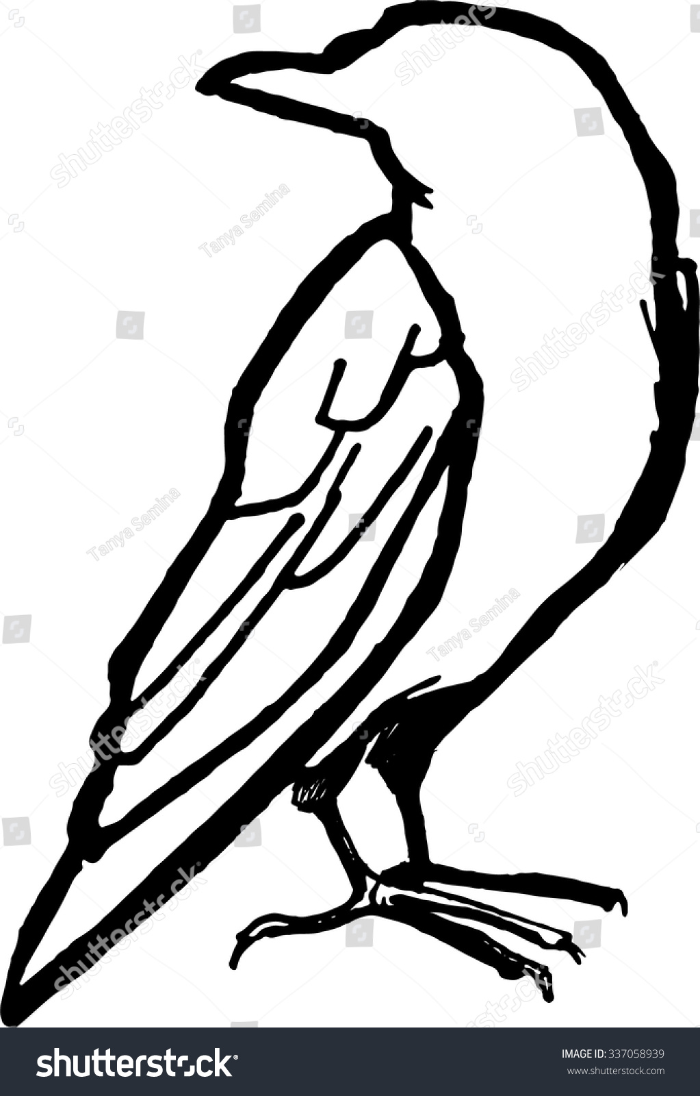 Line Drawing Raven : Raven line drawing pixshark images galleries