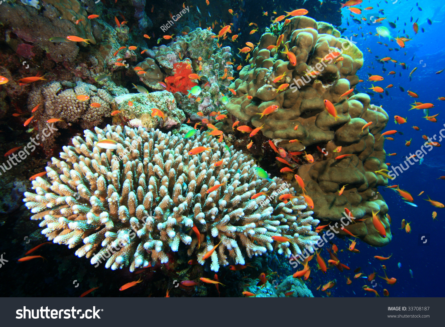 Beautiful Colorful Coral Reefs And Fish Beautiful Coral Reef C...