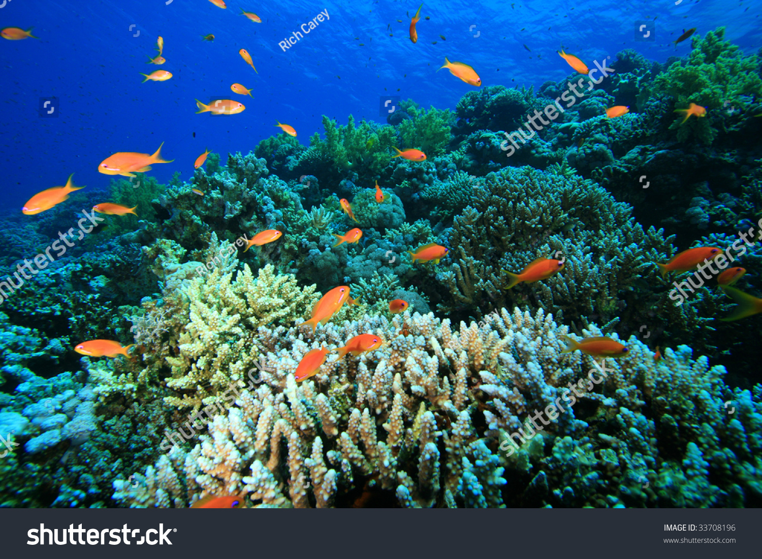 beautiful colorful coral reefs - photo #8