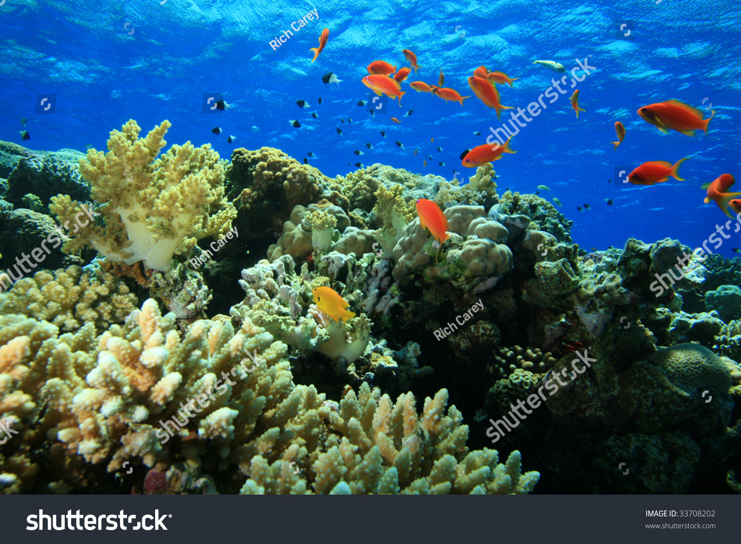 Beautiful Coral Reef Colorful Fish Stock Photo (Edit Now) 33708202 ...