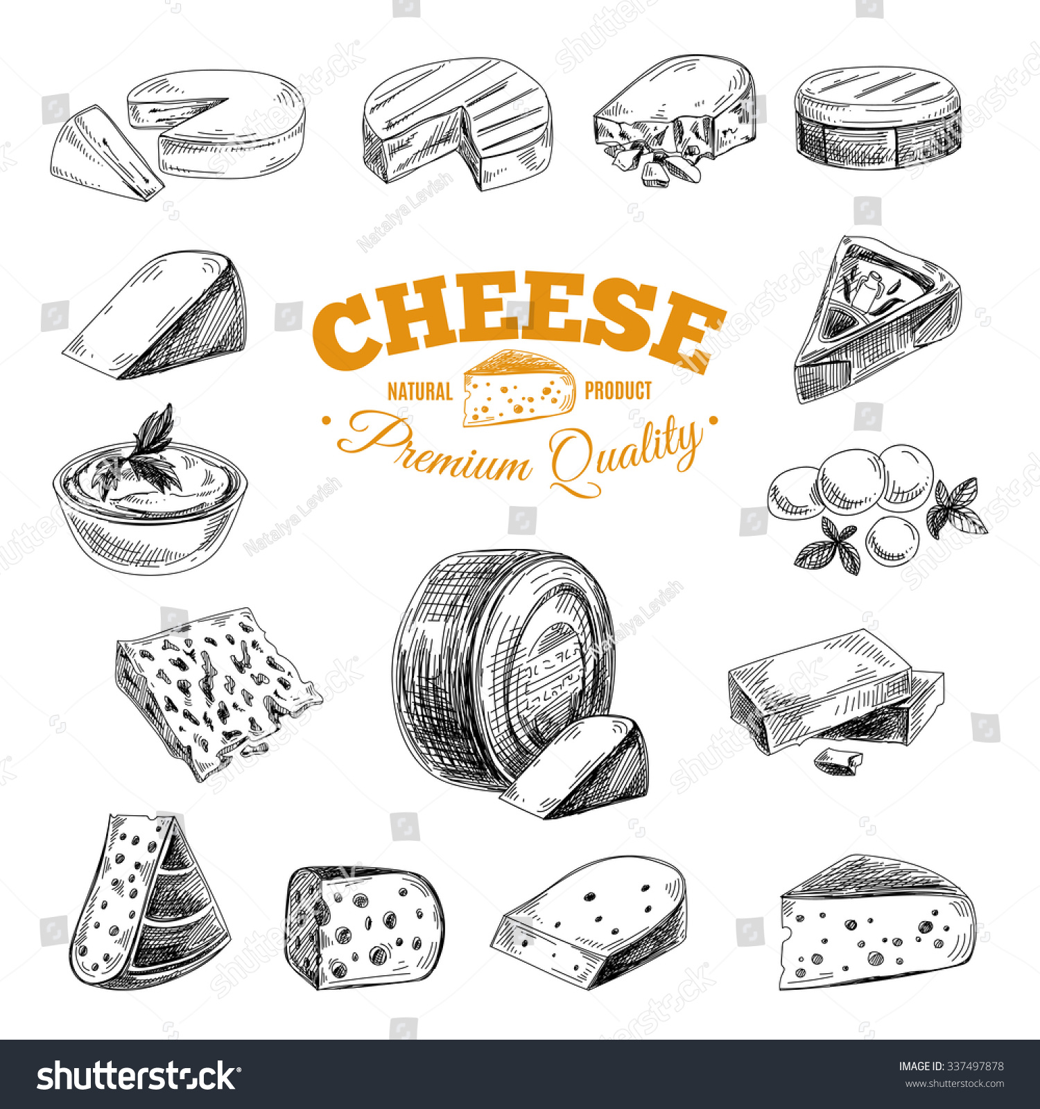 Vector hand drawn illustration with cheeses Sketch