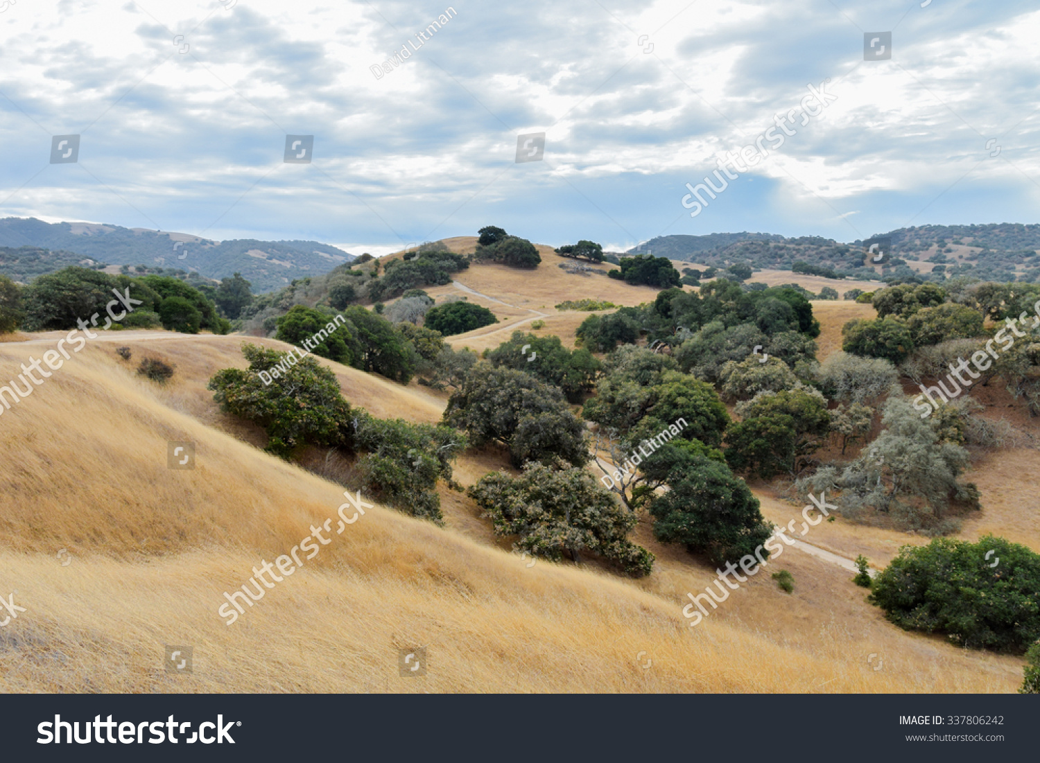 "Rolling hills and fields of dry grass with Coastal Live Oak trees in the foothills of central California, the ""Golden State"".  Five years of drought have led to hazardous fire conditions and risk."