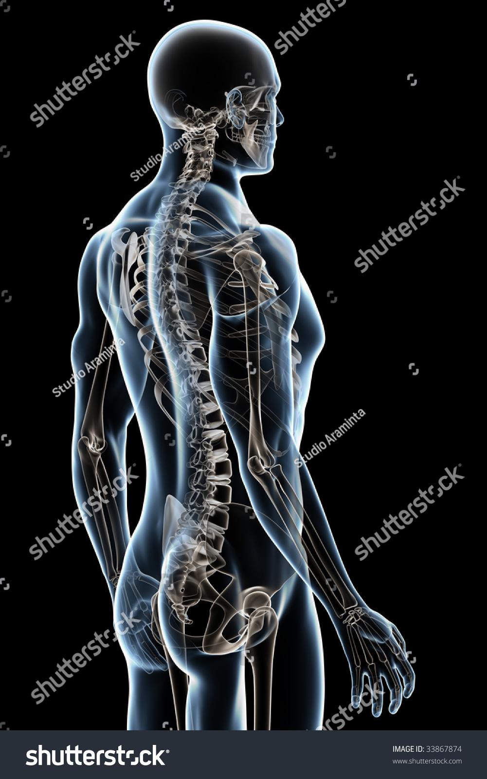 Xray Male Anatomy Over Black Background Stock Illustration 33867874 ...