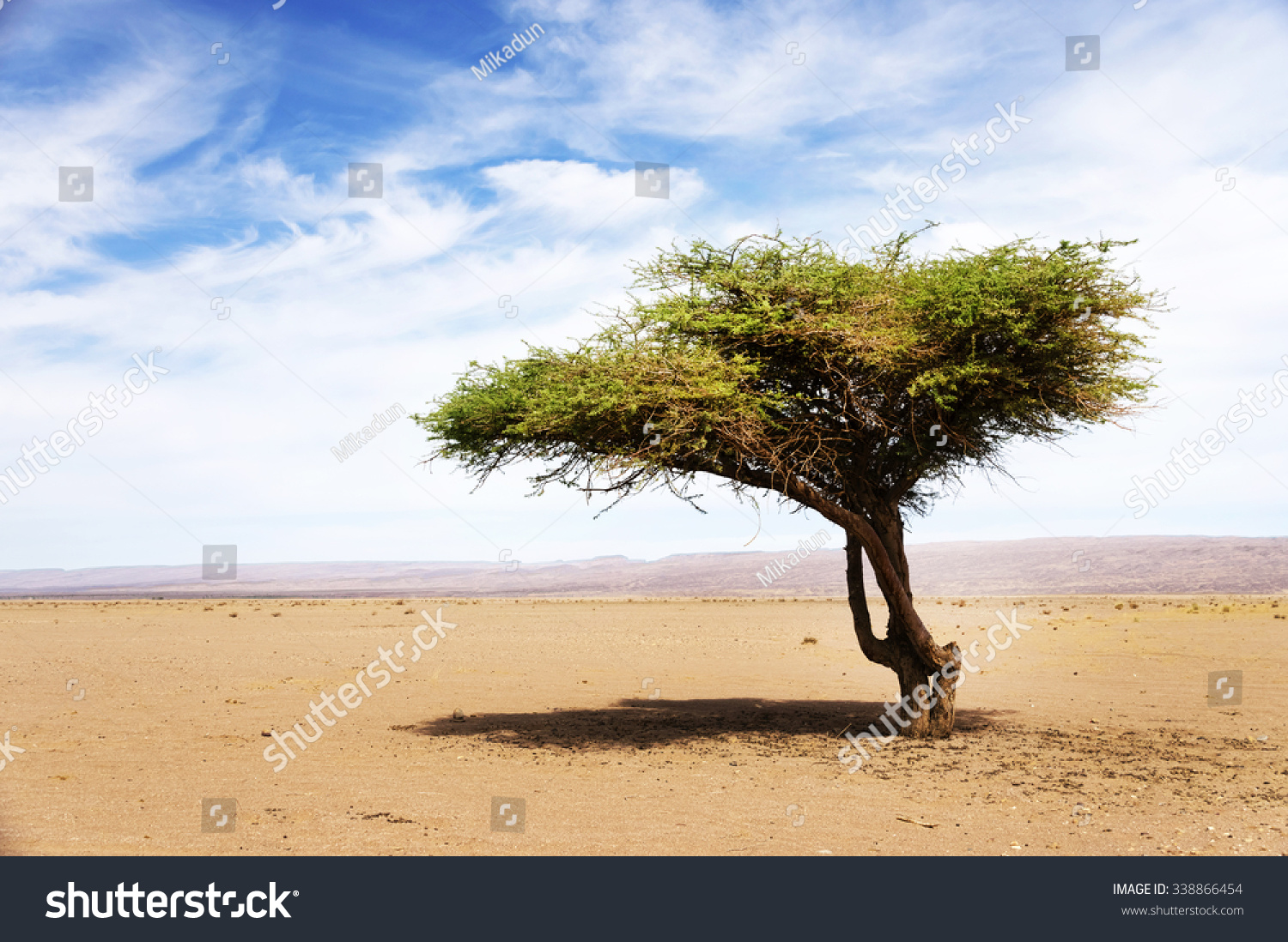 Acacia: Uses, Side Effects, Interactions, Dosage, and Warning