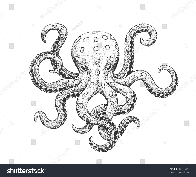 Line Art Octopus : Blueringed octopus classic drawn ink illustration stock