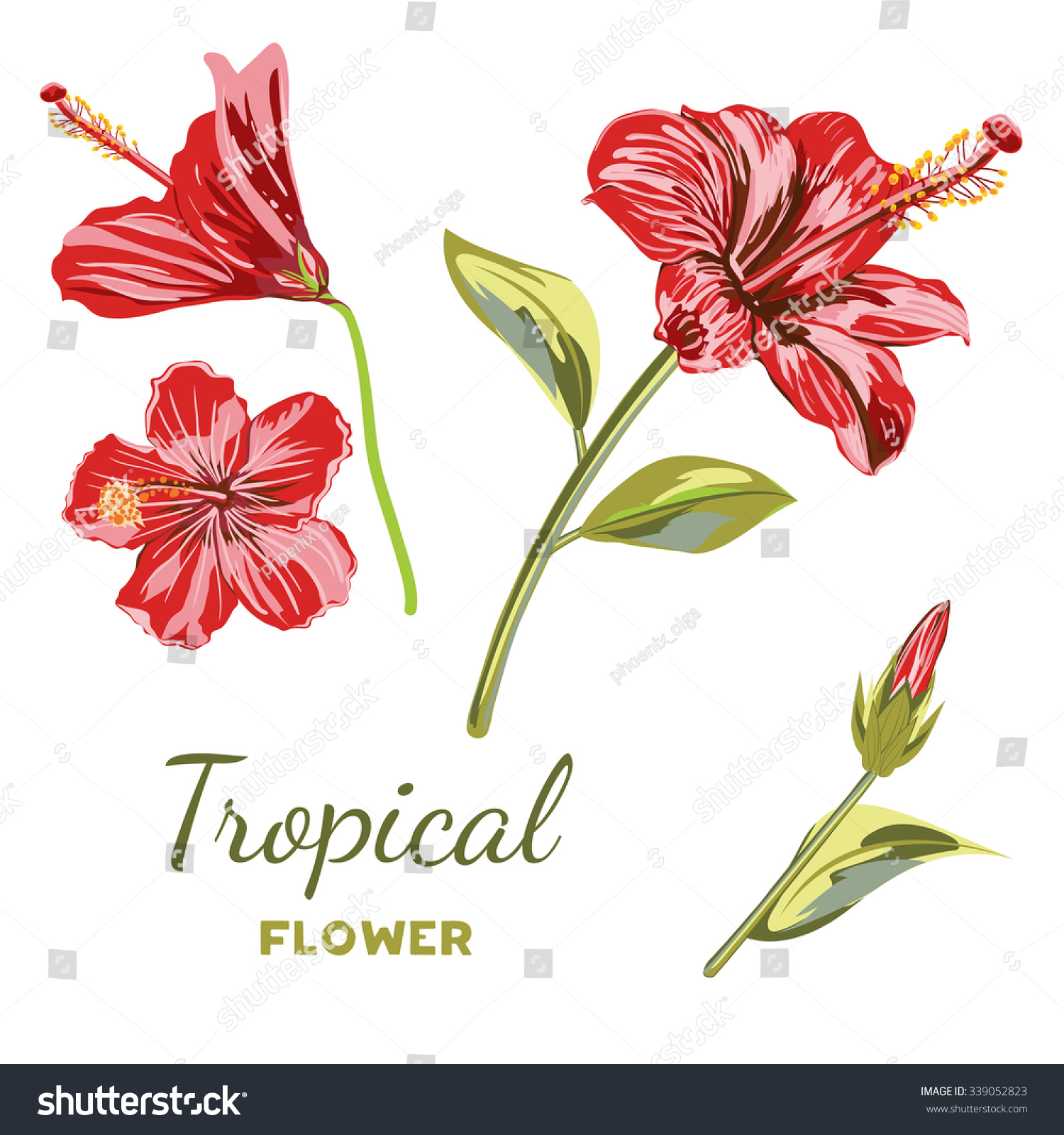 Hand drawn hibiscus flower collection tropical stock vector hd hand drawn hibiscus flower collection tropical flowers red color in different variations of the position izmirmasajfo