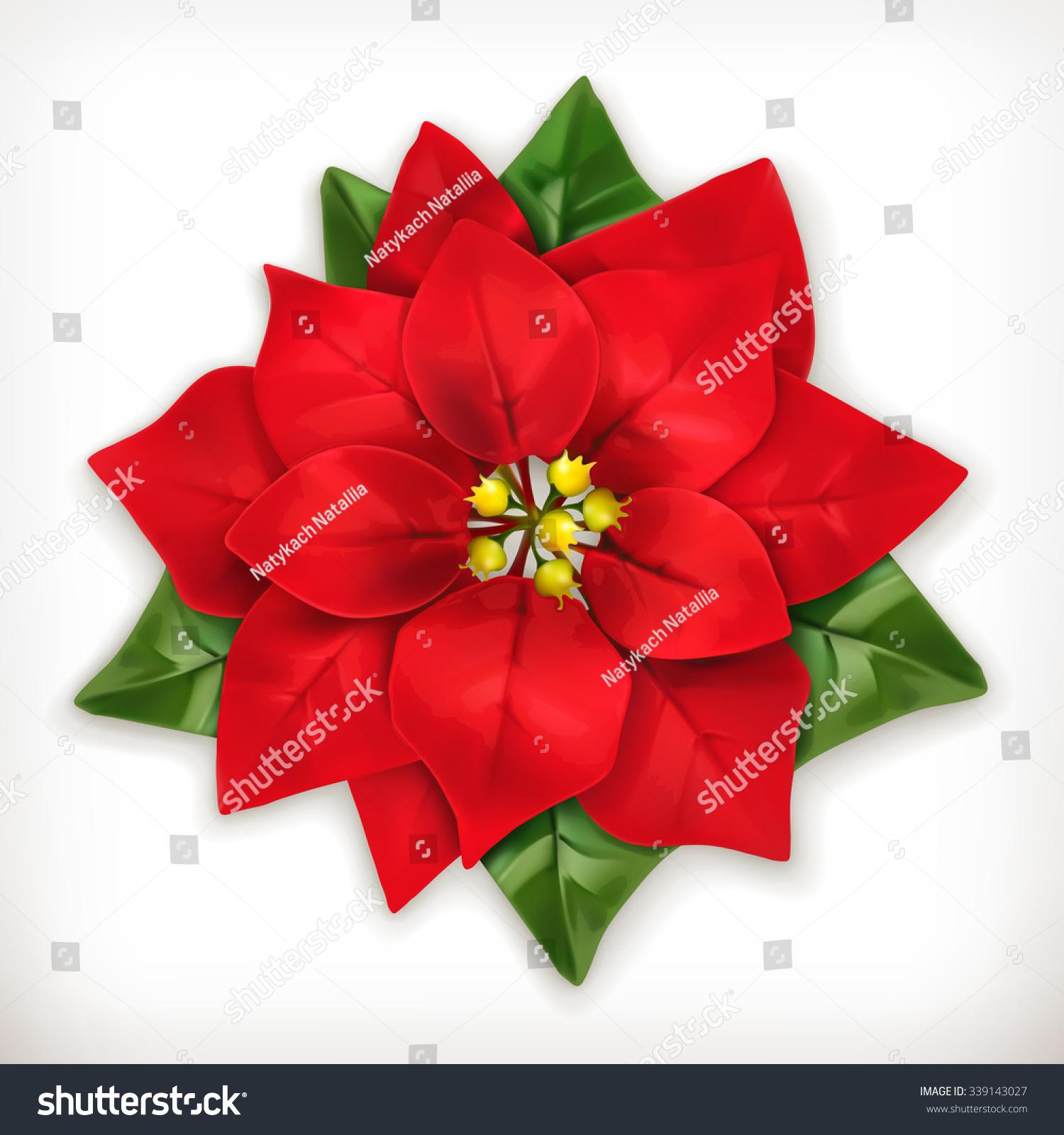 Poinsettia christmas star vector icon stock