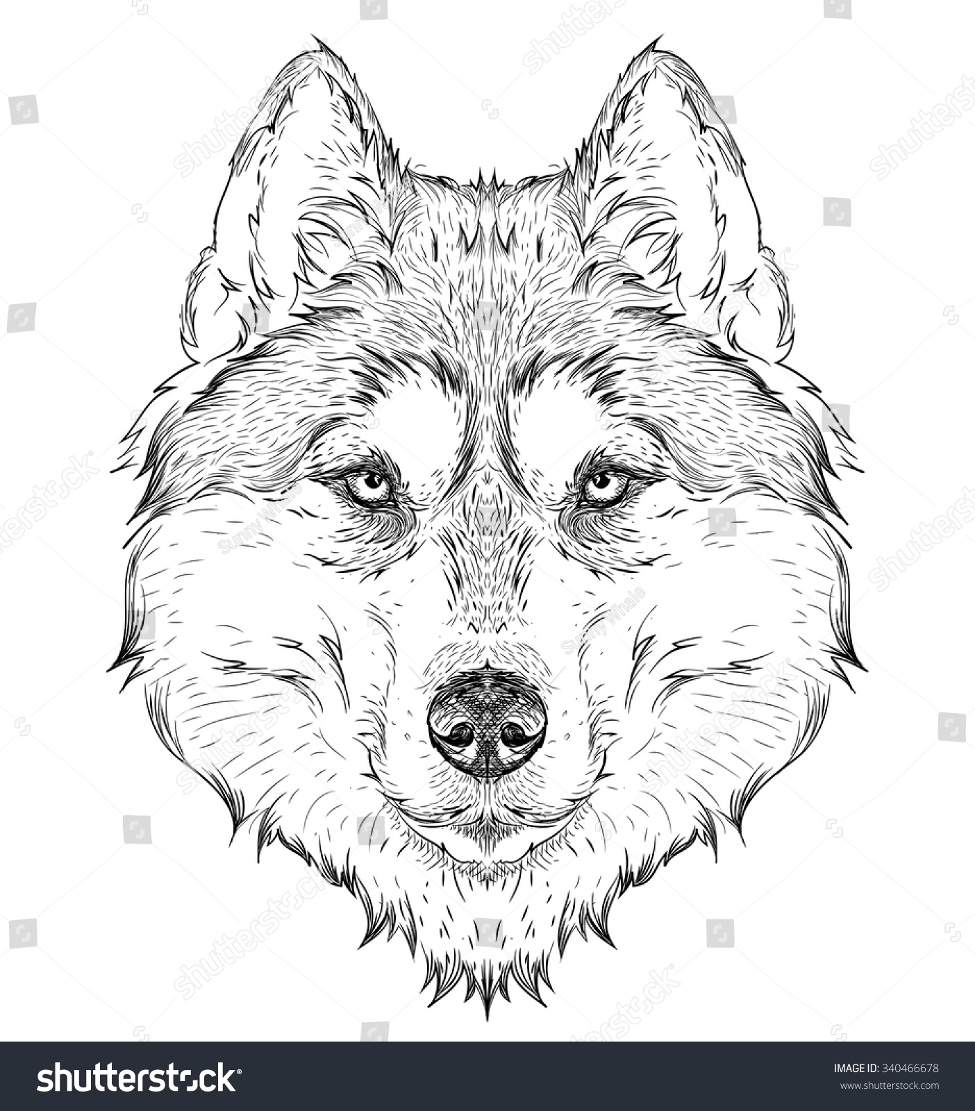 Gallery For gt Simple Husky Drawing