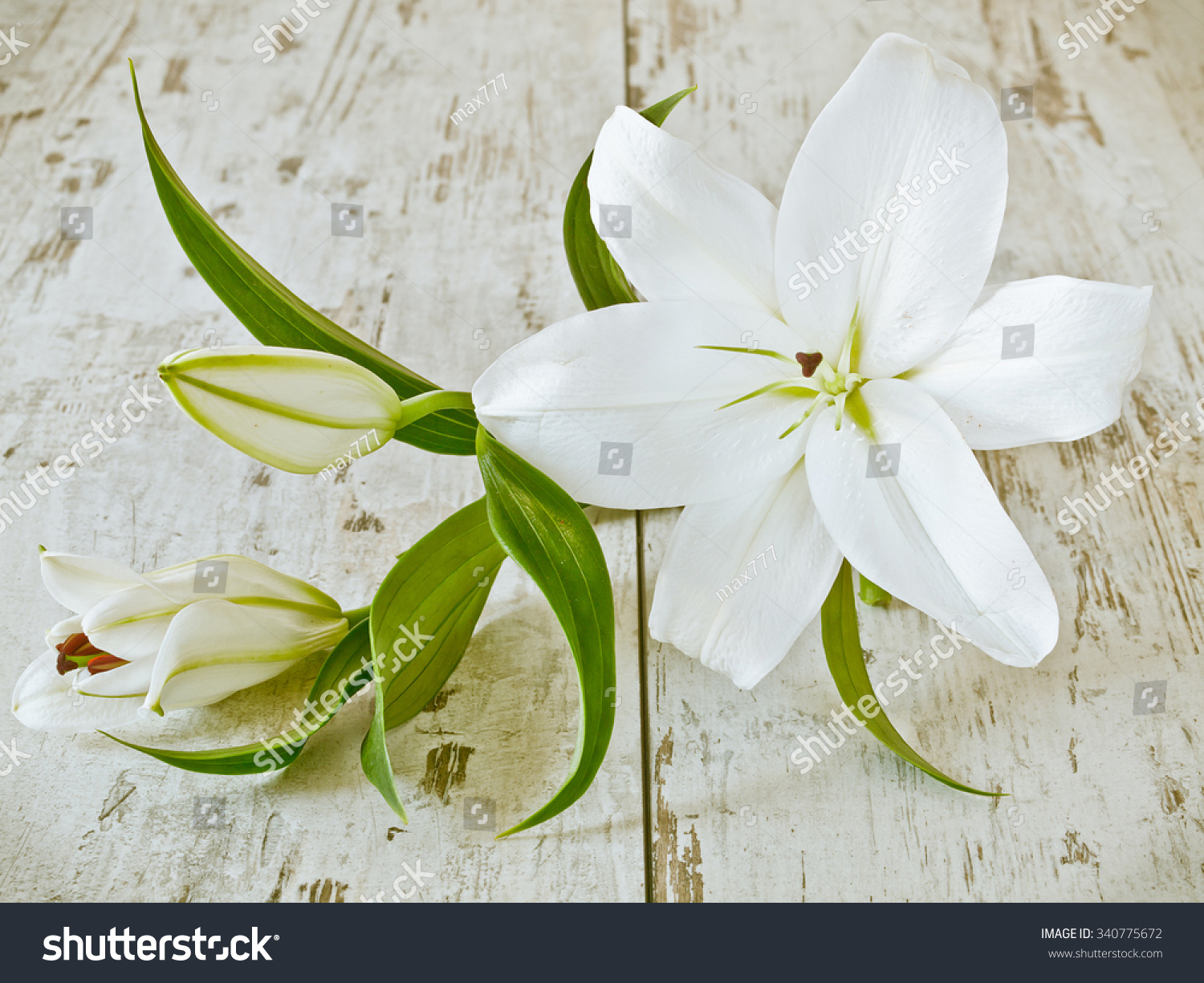 Beautiful White Lily Flowers Stock Photo Edit Now 340775672