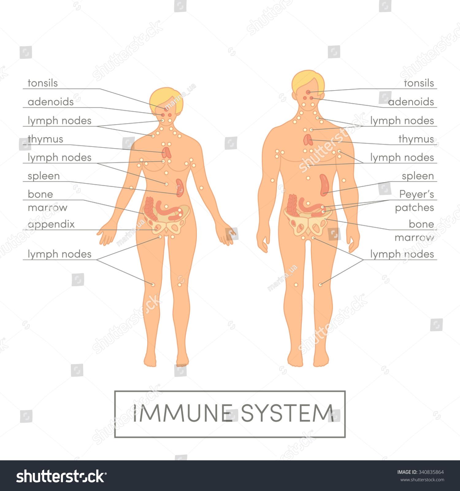 Immune System Human Cartoon Vector Illustration Stock Vector ...