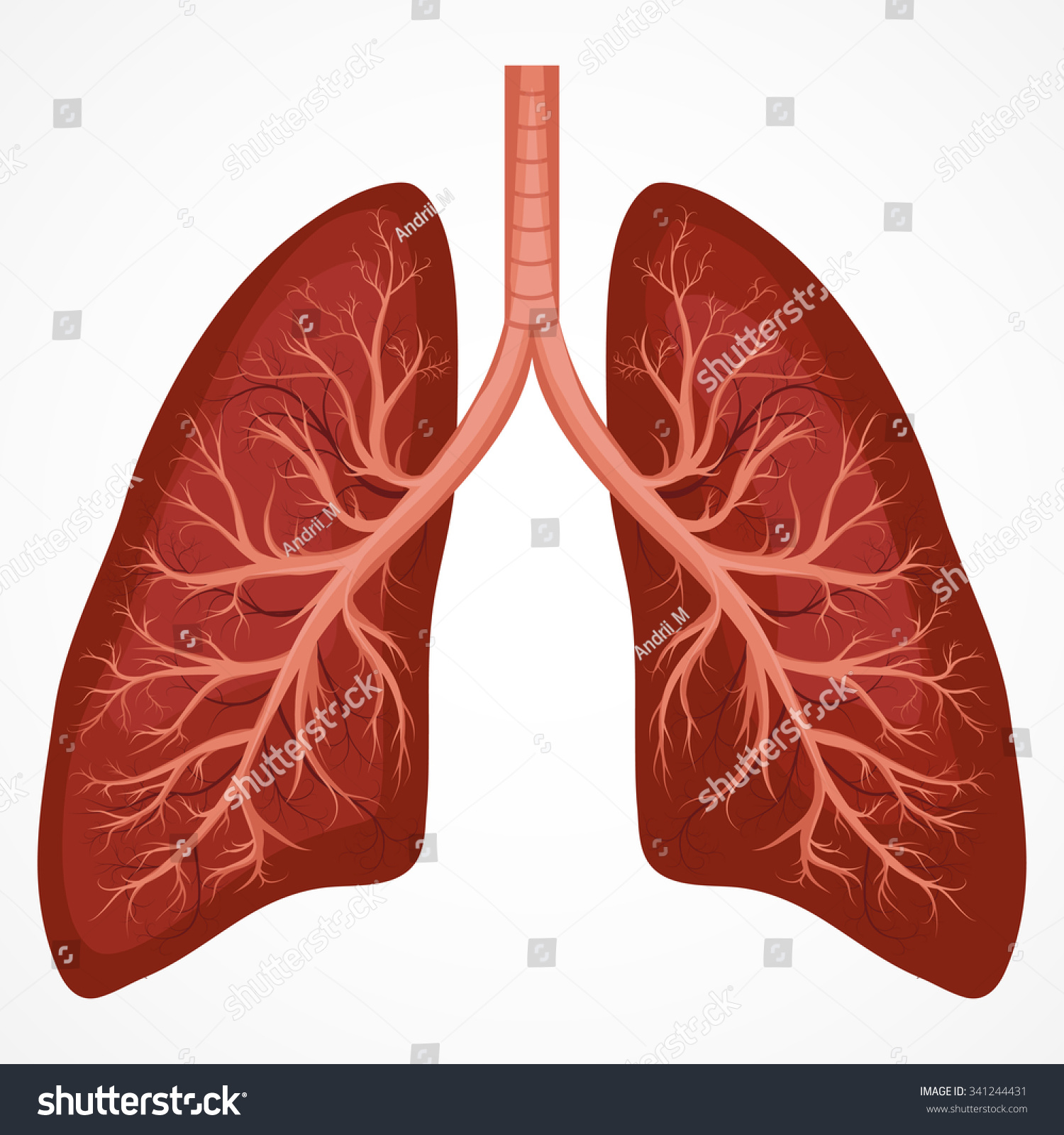 Human Lung Anatomy Diagram. Illness Respiratory Cancer ...