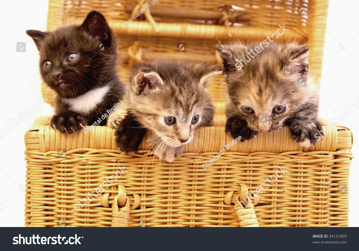Three Cute Little Cats Basket Stock Shutterstock