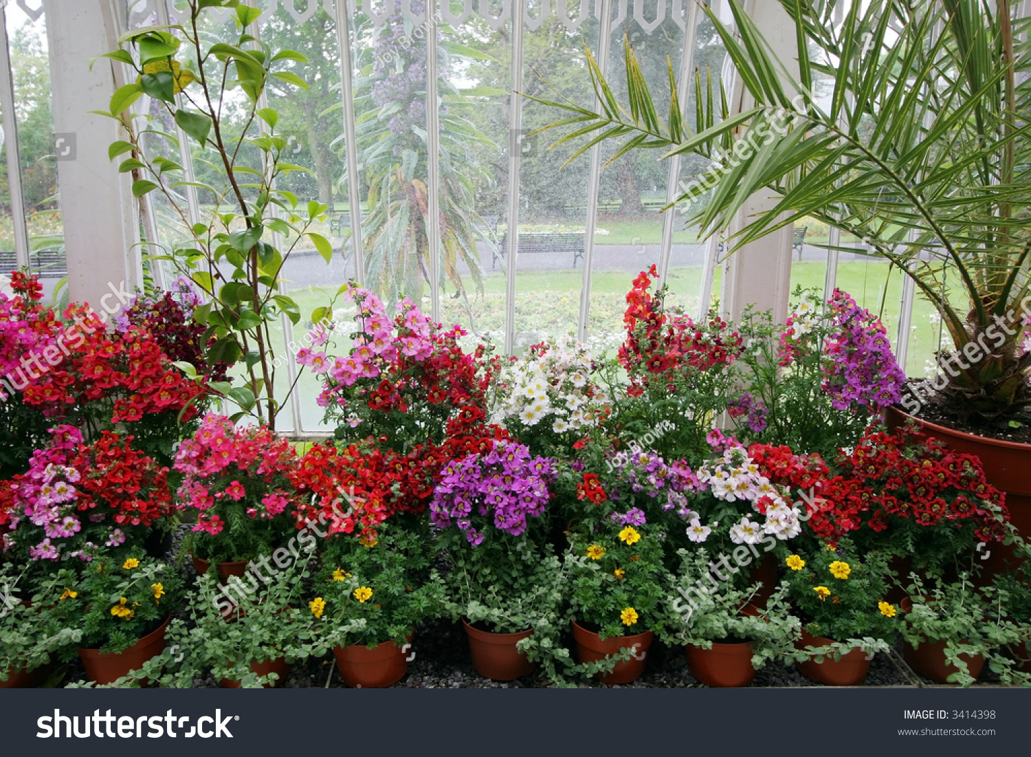 Beautiful Colorful Potted Flowers Palms By Stock Photo Edit Now