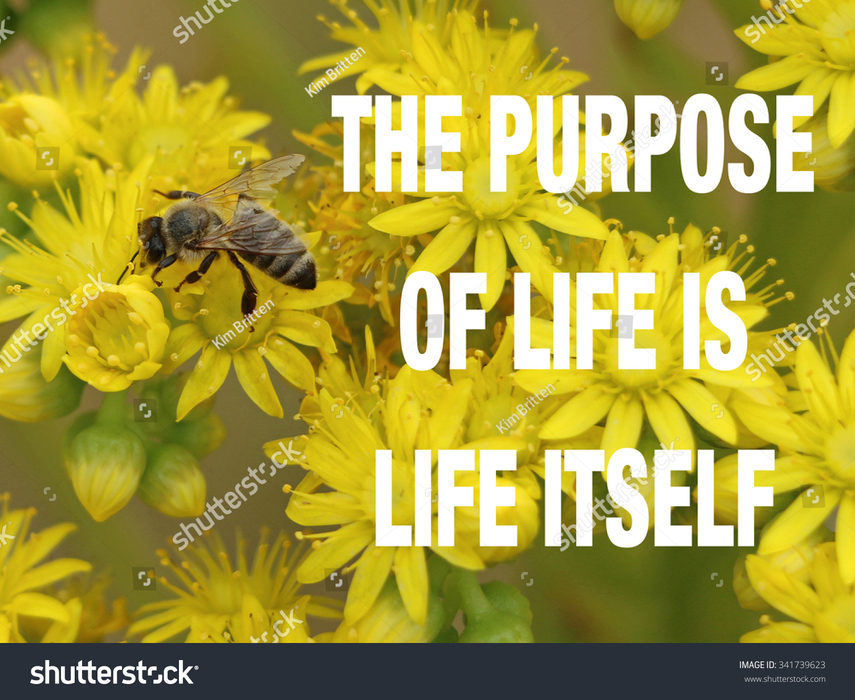 Bee On Yellow Flowers Purpose Life Stock Photo Edit Now Shutterstock