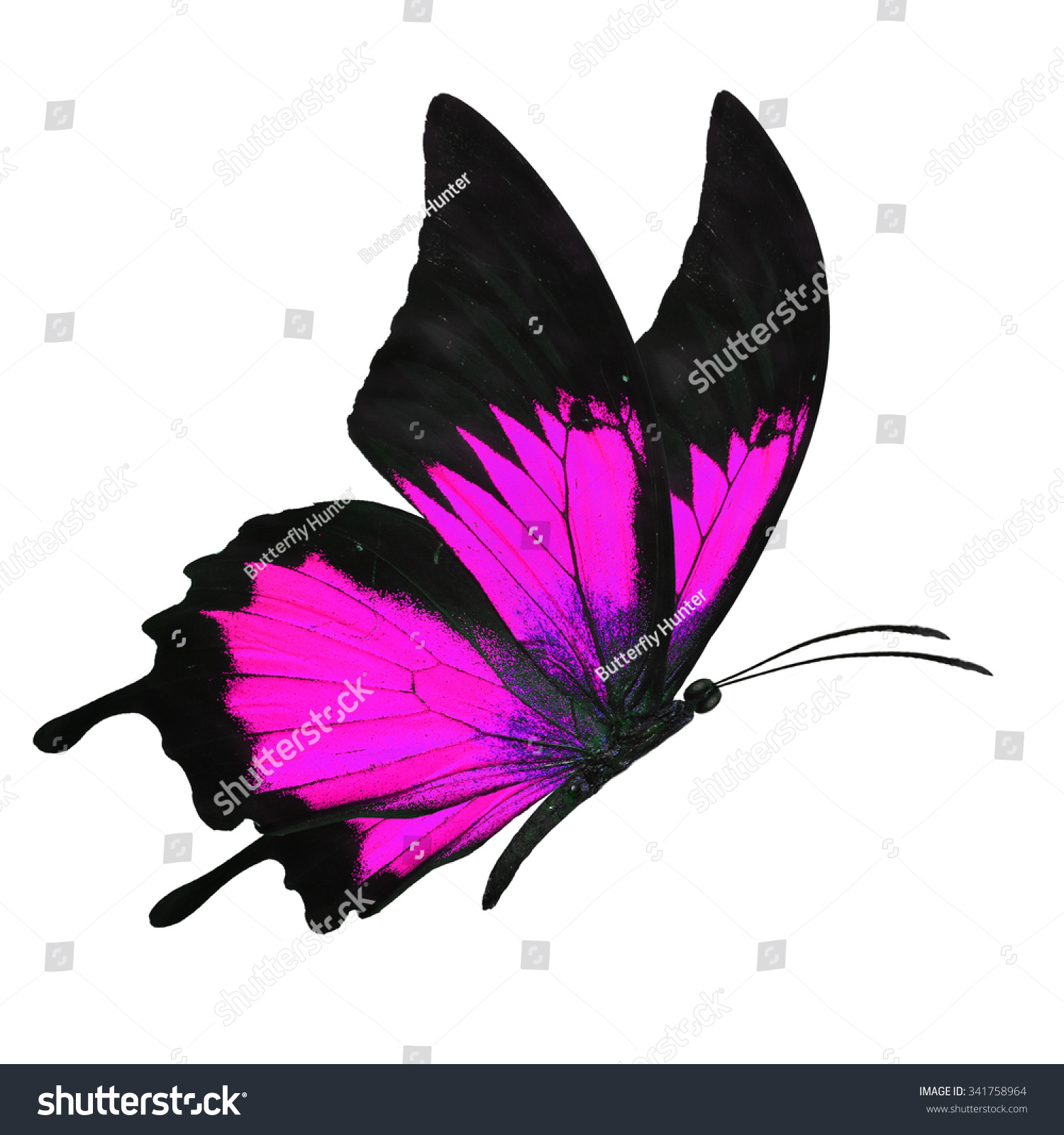 Beautiful Black Pink Butterfly Flying Isolated Stock Photo ...