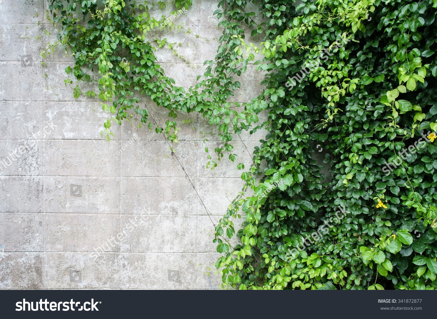 Abstract Plant Wall Background Green Creeper Stock Photo Edit Now 341872877