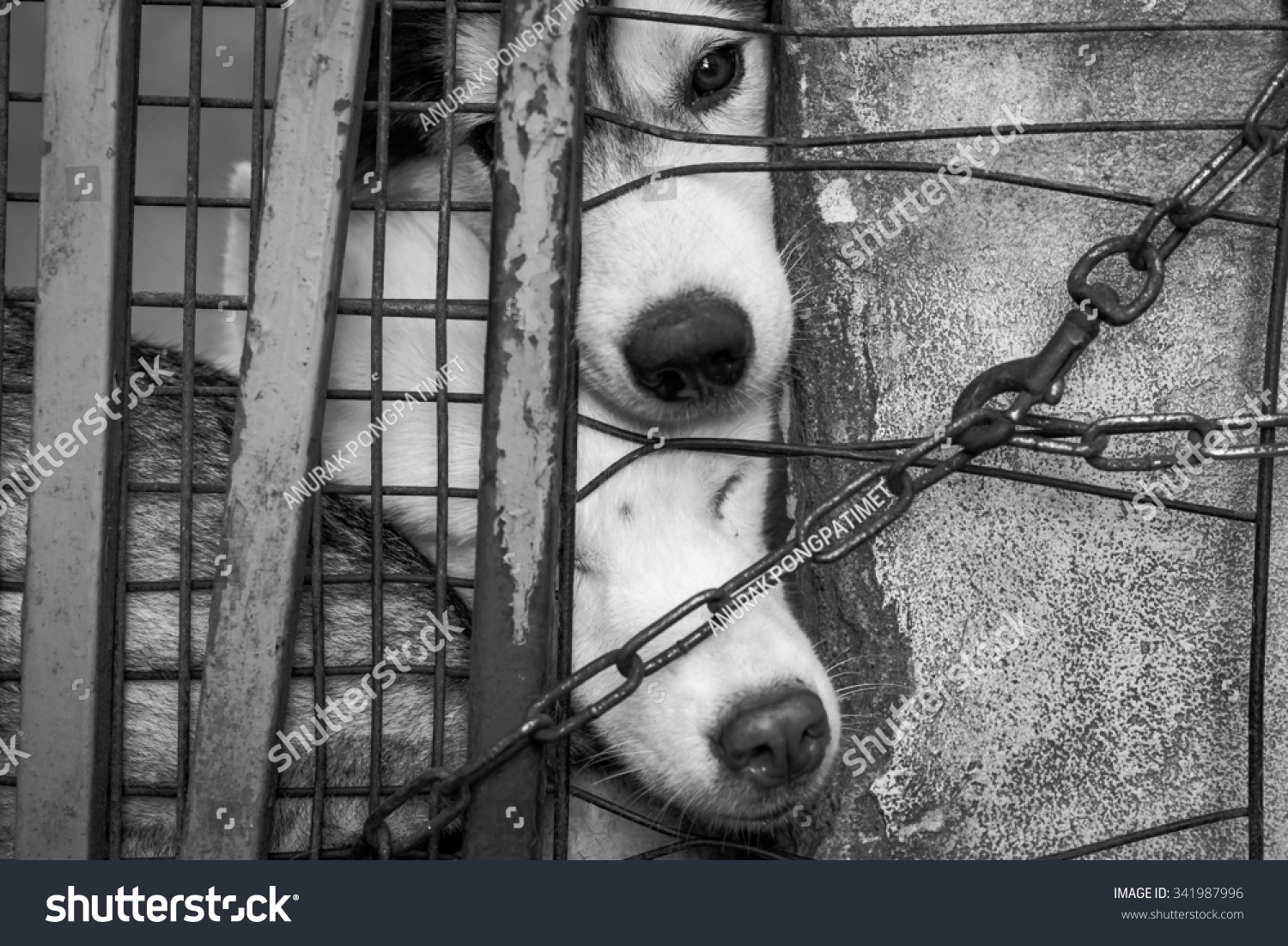 Sad dogs in cages black and white