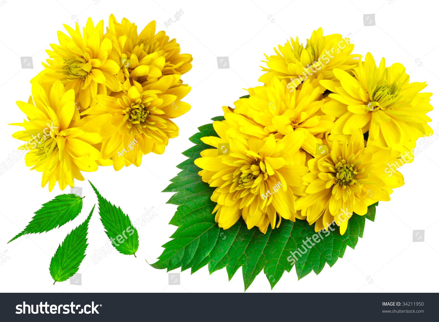 Yellow Color Flowers With Green Leafs Isolated On White Background