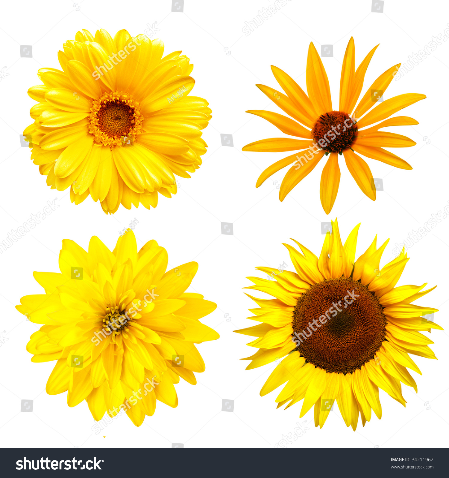 Fresh Yellow Color Flowers Isolated On Stock Photo Edit Now