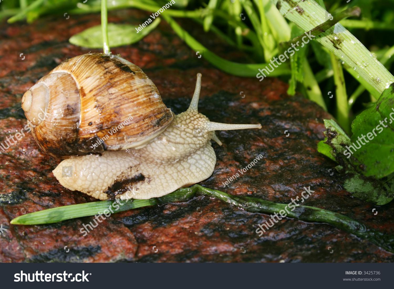 snail close up | EZ Canvas