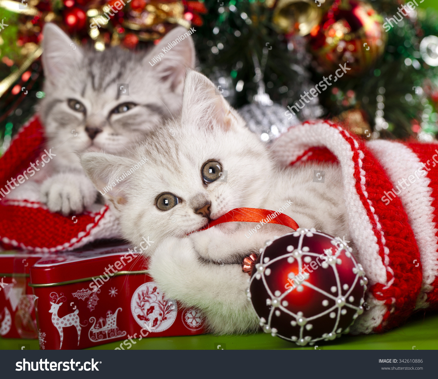 Christmas Kittens Stock Photo (Edit Now) 342610886 - Shutterstock
