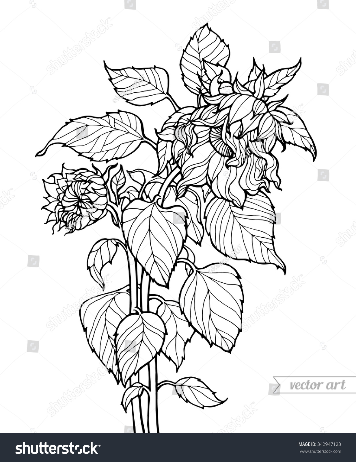 Clip Art Botany Coloring Pages botany coloring book eassume com pages eassume