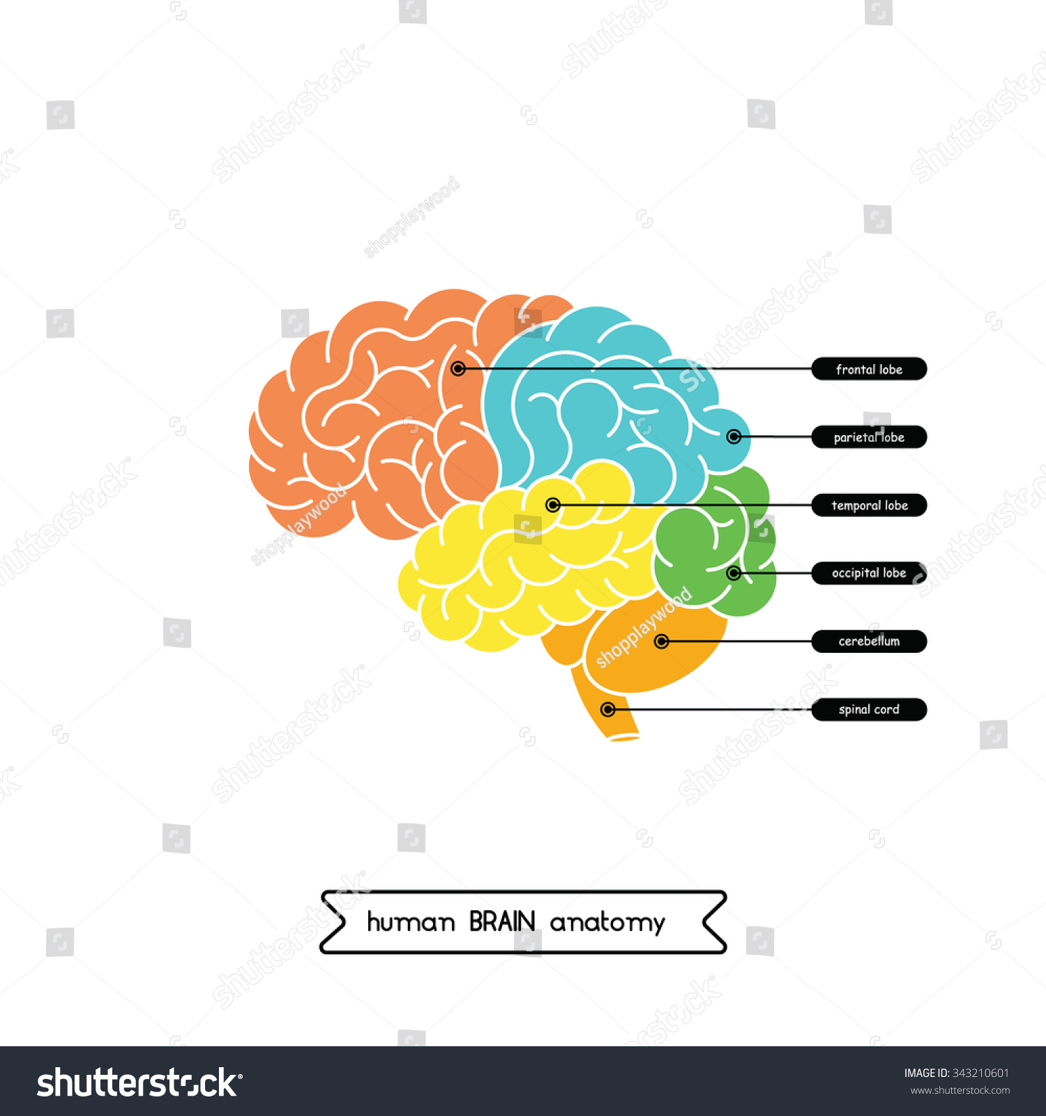 Brain Diagram Vector