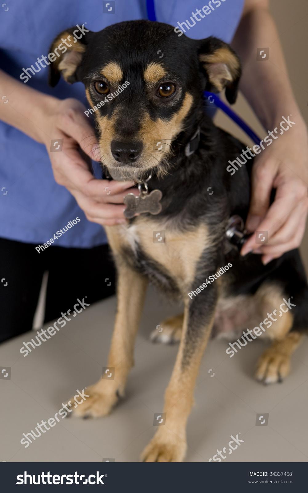 Dog Getting Examination Stock Photos