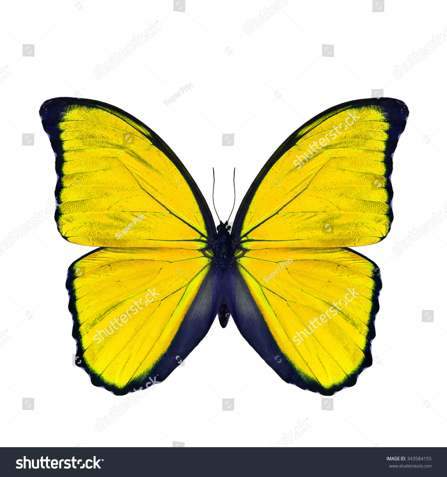 butterfly on yellow color - photo #22