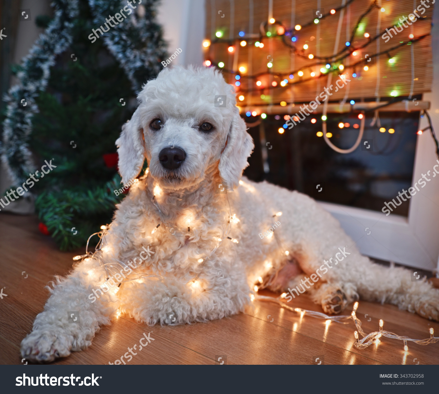 beautiful white dog posing with christmas lights - Dog Christmas Lights