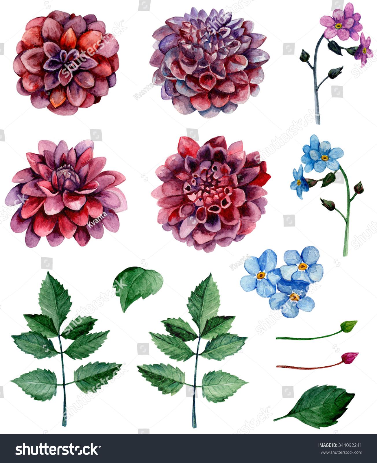 Watercolor blossom dahlias flowers clip art stock illustration watercolor blossom dahlias flowers clip art izmirmasajfo