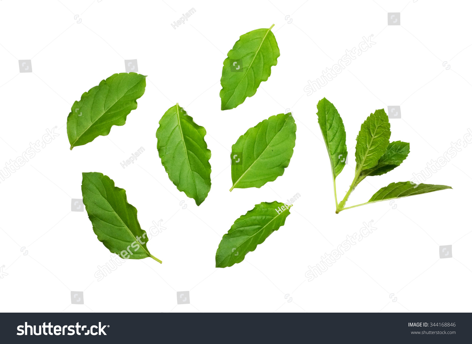 how to cut fresh basil leaves