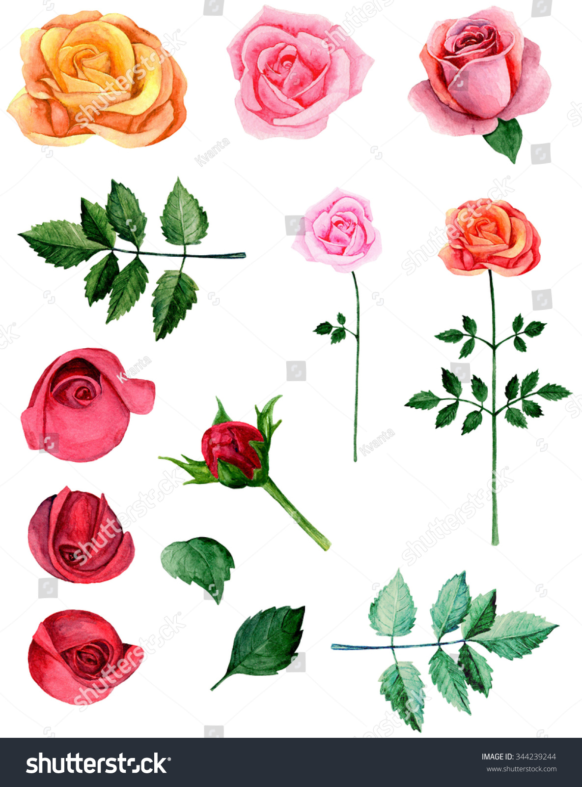Watercolor Red Roses Clipart Pink Flowers Stock Illustration