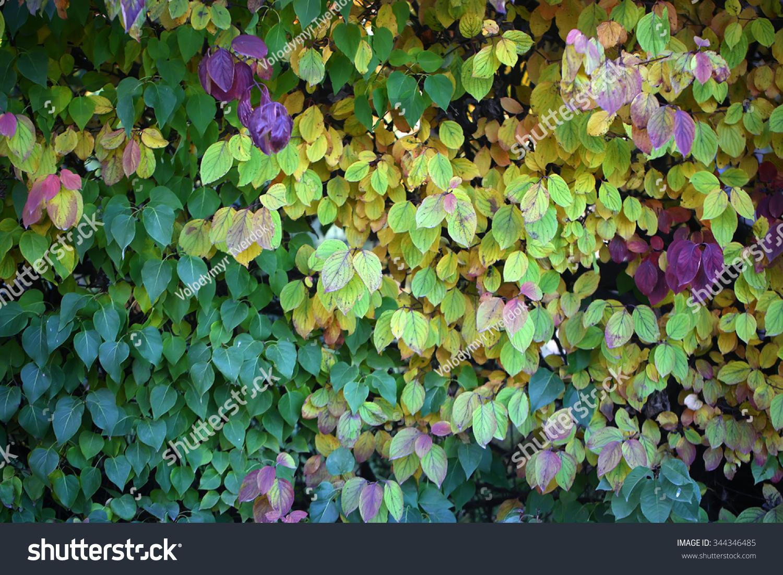 Photo Closeup Beautiful Autumn Verdant Hedge Stock Photo (Royalty ...